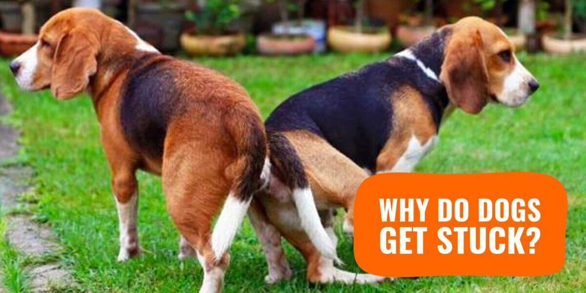 Why do dogs suddenly be quiet